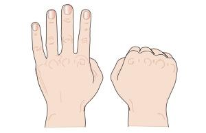 Fingerbild